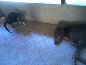 Mimiminho e Zig em 25-12-2012