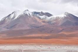 Walmir Cirne - Deserto boliviano (8)